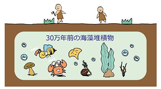 30万年前の海藻堆積物イメージ